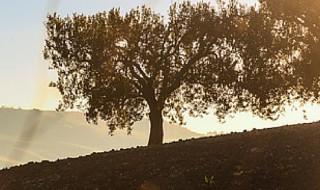 Basilicata regione agricola