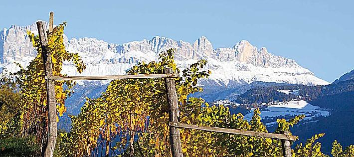 vini di montagna vini estremi