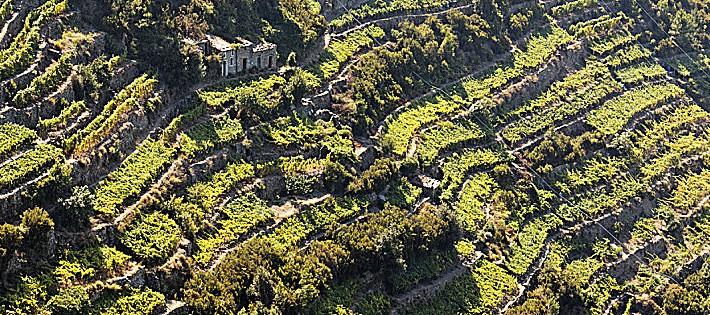 I migliori vini della liguria e dell 39 emilia romagna gambero rosso 2017 - Gambero rosso bagno di romagna ...