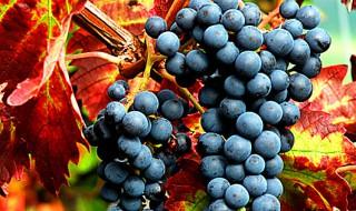 produzione-di-vino-2016