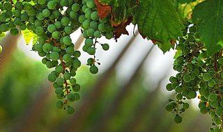 vino franciacorta dati 2017