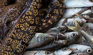 legge 2017 sulla pesca in italia