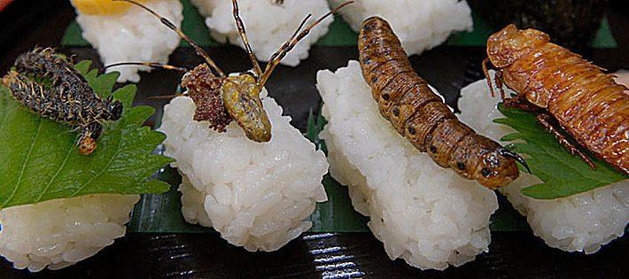 insetti a tavola in italia