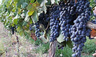 migliori vini della lombardia viniplus 2018