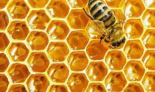 mercato del miele italia 2018