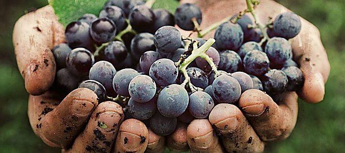 abolizione voucher settore vinicolo
