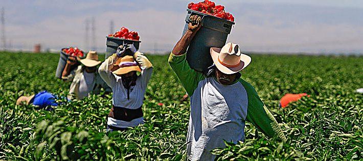 nuovi voucher 2018 in agricoltura