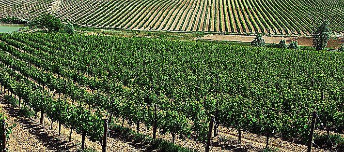 migliori vini abruzzesi e molisani 2019