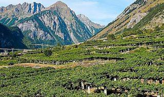 migliori vini valdostani 2019