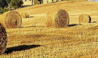 agricoltura italiana produzione 2018