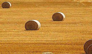 def 2019 agricoltura
