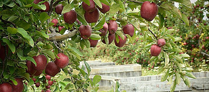 frutteti in europa dati 2019