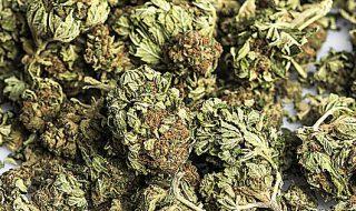 cannabis legale previsioni