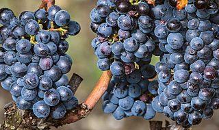 migliori vini romagnoli 2019