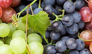 produzione di uva italia