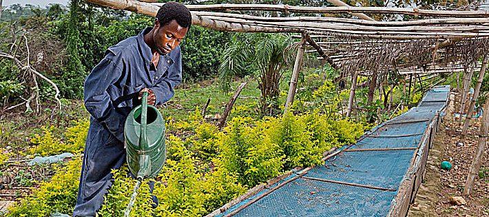 lavoratori agricoli stranieri 2019