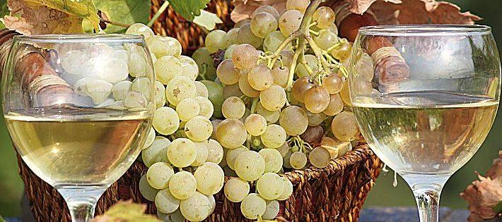 migliori vini marchigiani 2020