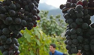 migliori vini della lombardia 2020