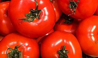 pomodori 2019 produzione italiana