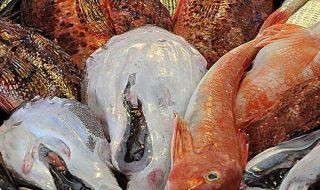 pesca richieste italiane coronavirus