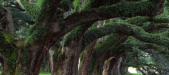 alberi monumentali italiani online
