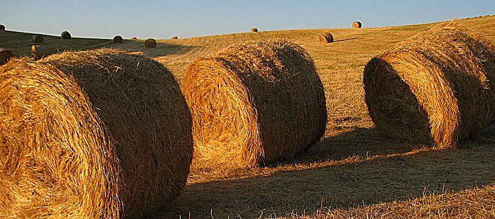 decreto rilancio agricoltura