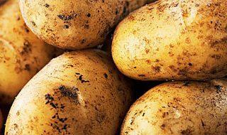 patata di bologna dop 2020