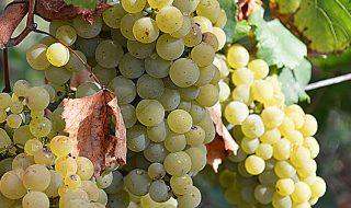campagna vinicola 2020-2021 vademecum