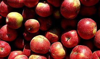 produzione di mele 2020