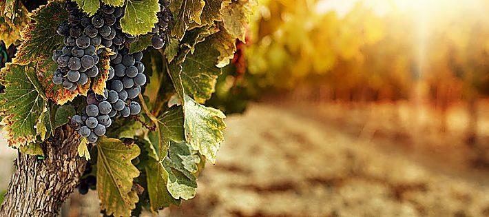 migliori vini siciliani 2021