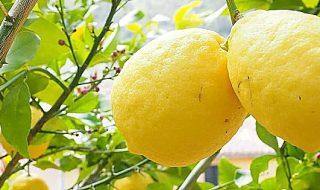 limone dell'etna diventa igp
