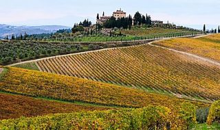 migliori vini toscani 2021