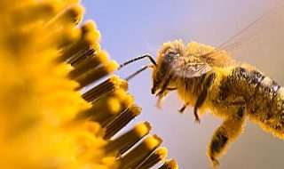 api e pesticidi lombardia
