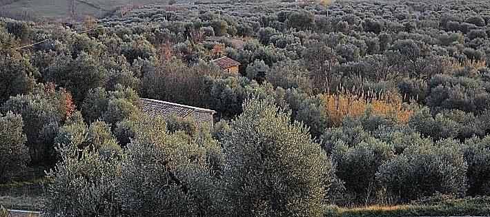 paesaggi rurali novità