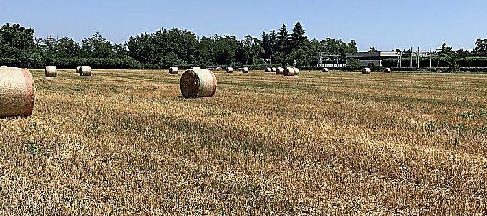 legge di bilancio 2021 agroalimentare