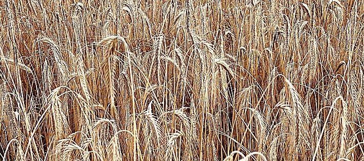 agricoltura linee programmatiche patuanelli