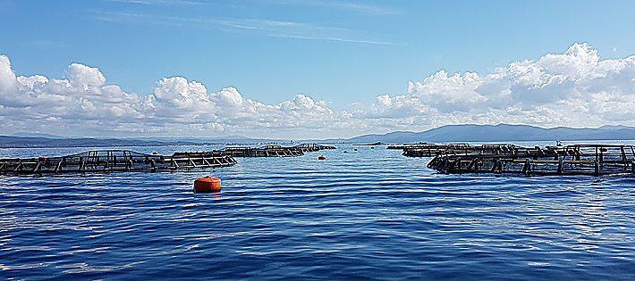 acquacoltura bando 2021 covid