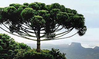 alberi monumentali italiani censimento 2021