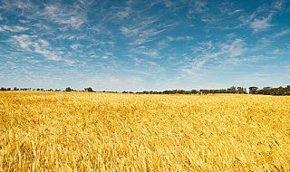 banca nazionale delle terre agricole 2021
