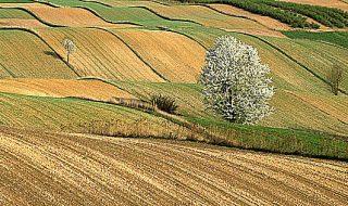 gestione del rischio in agricoltura ismea 2021