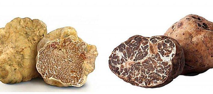 truffle market app tartufi